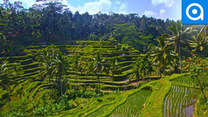 Bali: Enjoy Jungle Swings Full of Waterfalls and Rice Fields