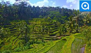 Bali: Enjoy Jungle Swings Full of Waterfalls and Rice Fields