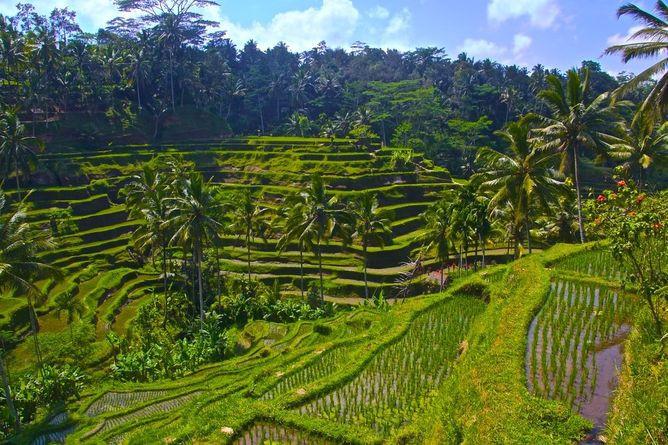 Beautiful Tegalallang Rice Terrace, Bali