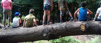 gruppo su albero.jpg