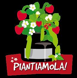 PIANTIAMOLA_trasp.png