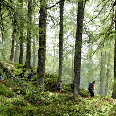 Giù per il bosco