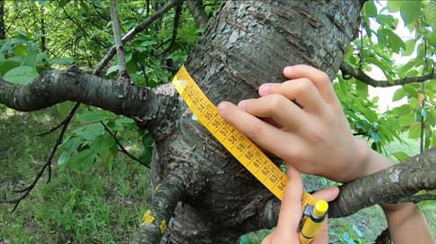 albero in cartella.mp4