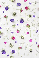 バイオレット花