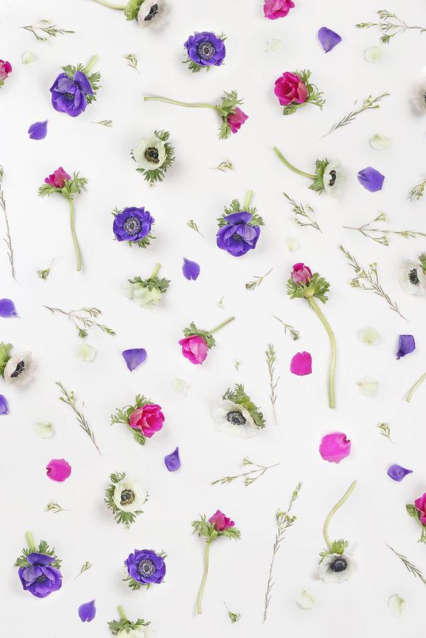 Fleurs Violet