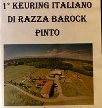 Barock_Pinto_Italy_DVD_1°_Keuring.jpg