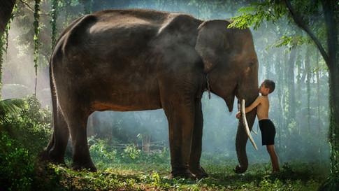 A Boy, an Elephant and a Long White Cloud