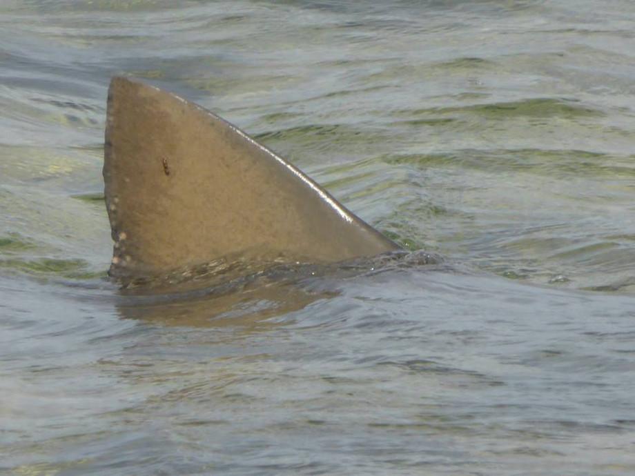 Shark Experience4.jpg