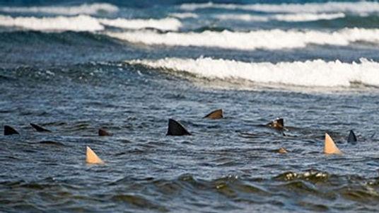 Shark Experience1.jpg