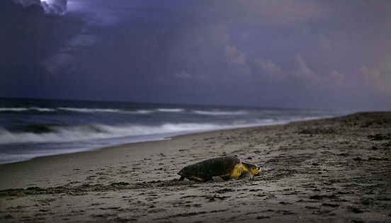 Turtle PJ - Nokia.jpg