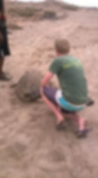 Turtle Rescue.jpg