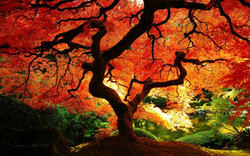 Arborist favorite