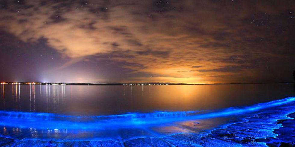 Bio-luminescence Tour (seasonal)