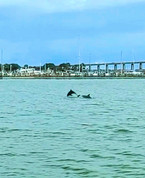 Jumping Dolphin!!!
