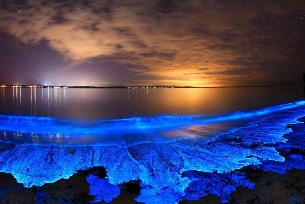 Bioluminescence Tour (seasonal)