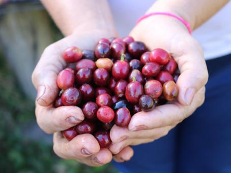 Tecnologia e qualidade na cadeia de produção e mercado do café