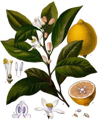 Про лимон