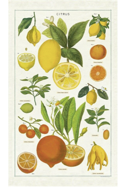 Citrus Poster + Hanging Poster Kit