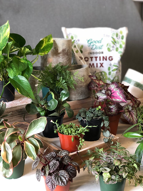 Plantmate Home Project Kits