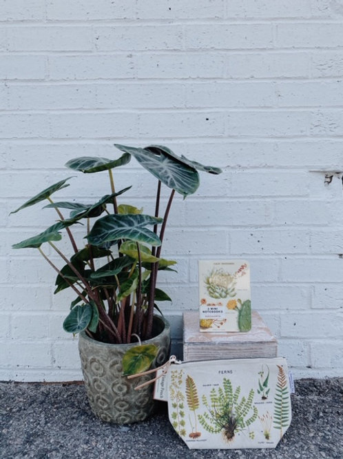 Potted Plant Gift Set
