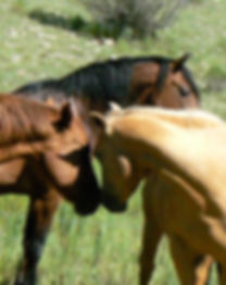 NM Horse ranch for sale