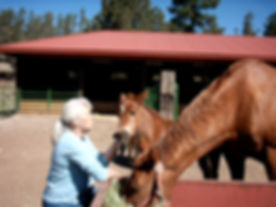 New Mexico equine property for sale