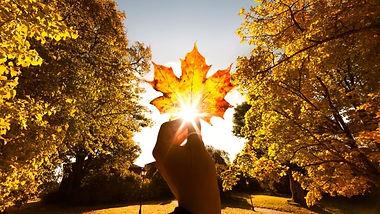 October maple-leaf.jpg