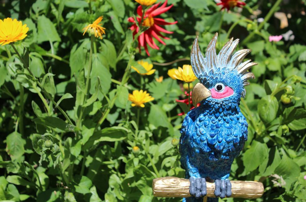 Blue Parrot St Katherine's Garden