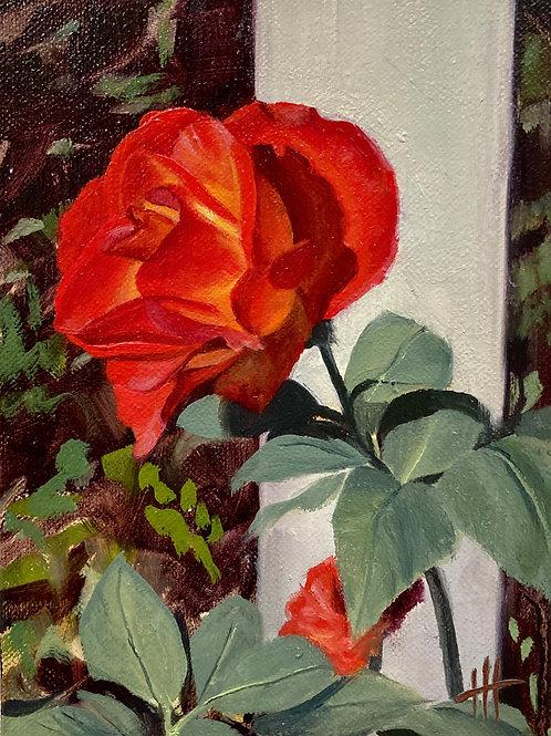 Red Rose 3/15/2021
