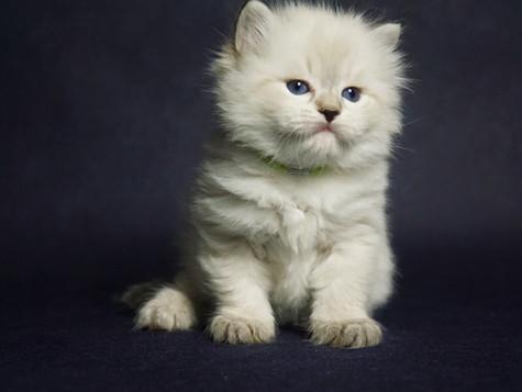 Przedstawiamy kociaki miotu I :)