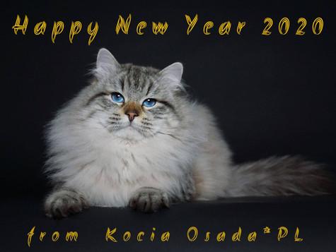Wszystkiego najlepszego w Nowym Roku życzy Kocia Osada*Pl / Happy New Year from Kocia Osada*Pl
