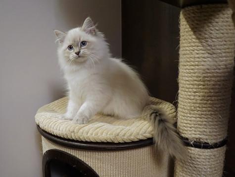 Wszystkie kociaki z miotu H znalazły swoje nowe domy :)