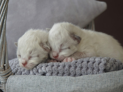 Welcom litter S / Witamy miot S :)
