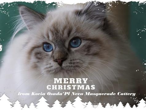 Wesołych Świąt! / Merry Christmas!