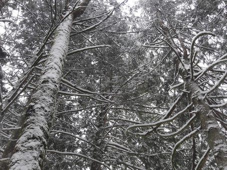 Sustainably Chronicles: Preparing for Winter Weather
