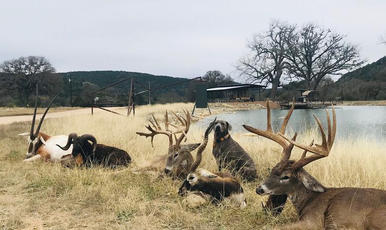 exotic-hunts-south-texas