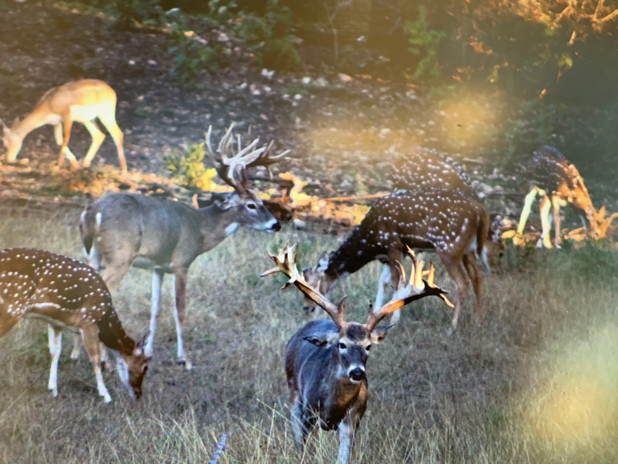 whitetail-hunts-9