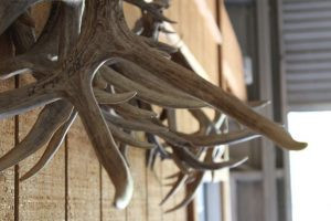 whitetail-hunting-texas-hill-country