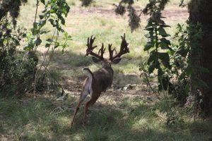 whitetail-hunts-10