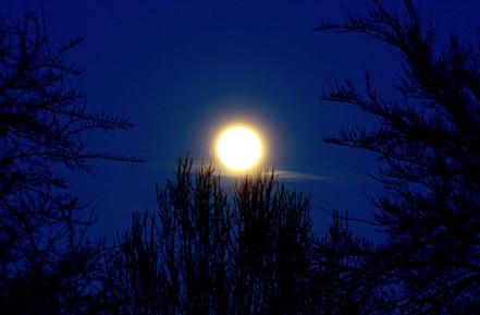 """""""Full Moon Trees"""""""