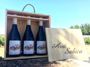 Lançamento do Avó Sabica 2013
