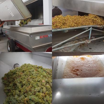 Harvest 2018: Joaquim Madeira White