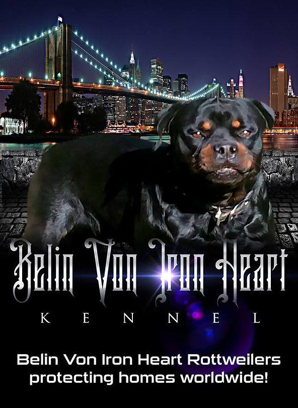 Belin Von Iron Heart Rotts