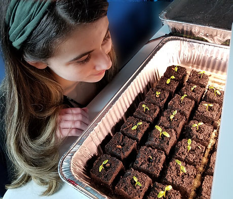 Youth growing milkweed seedlings