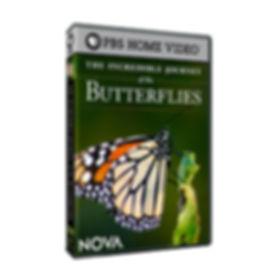 PBS Butterflies DVD.jpg