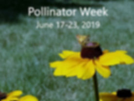 Pollinator Week 2019