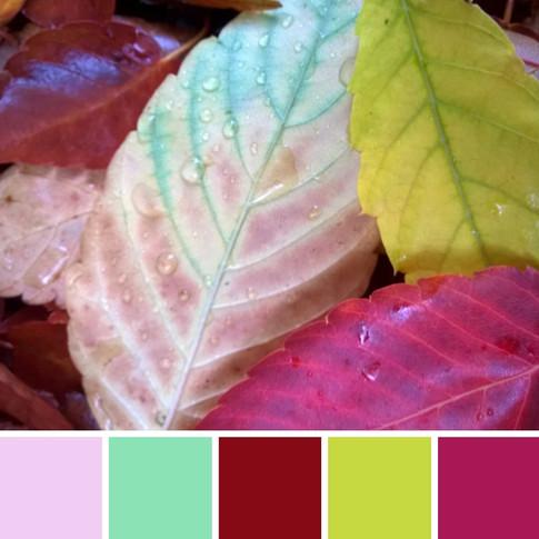 Astrid Blake orginial photo, leaves, nature colour inspiration