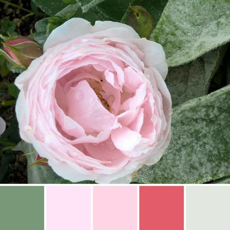 Astrid Blake, photo, floral inspiration colour