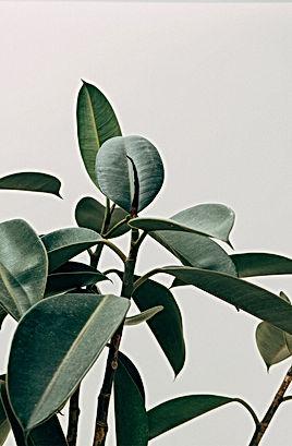 Office_Plant.jpg