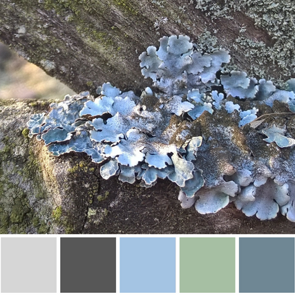 Astrid Blake orginal photo and colour palette inspiration natures details